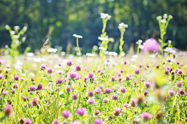 wildflowers-817178_960_720