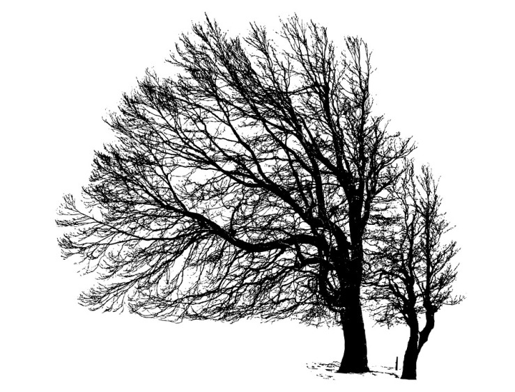 tree-2781576_960_720
